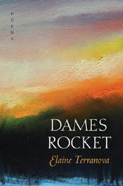 Dames Rocket by Elaine Terranova